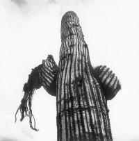 09_kaktusai_kaktusas2.jpg